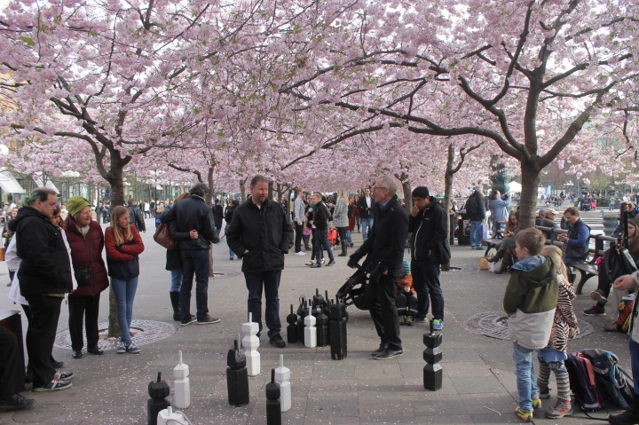 A game of street chess among cherry blossoms