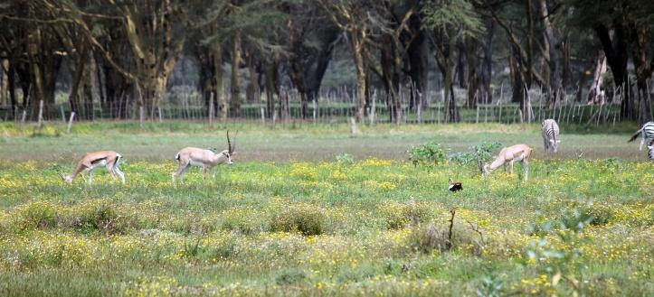 African wildlife - Lake Naivasha