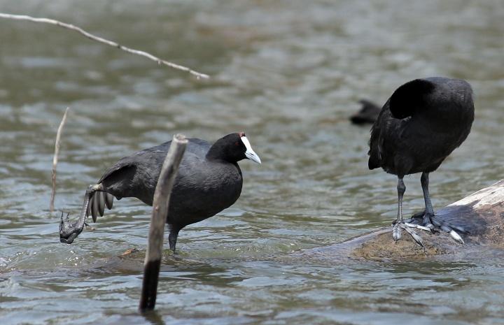 Birds - Lake Navisha