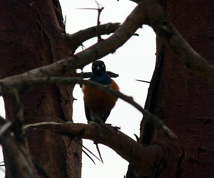 More birds -Lake Naivasha